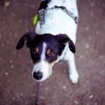 Hund_Lichtzirkus_Photographie