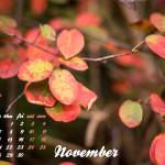 Herbst_Wallpaper_November_2013_Lichtzirkus_Photographie