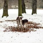 Wildpark_Lindenthal_Lichtzirkus_Photographie