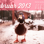 Wallpaper_Februar_2013_Lichtzirkus_Photographie