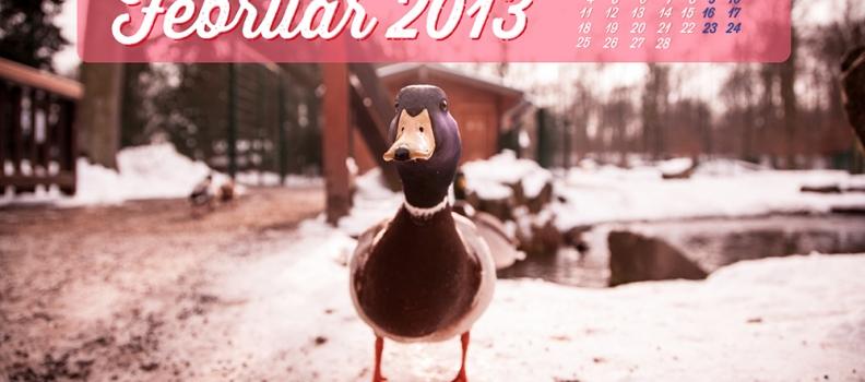 WALLPAPER // Februar 2013