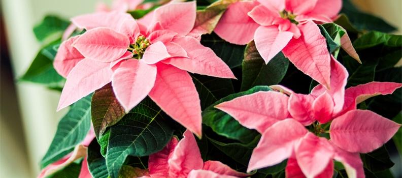 //So viel Stress zur Weihnachteszeit…